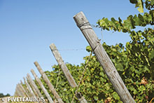 Milled vine stakes